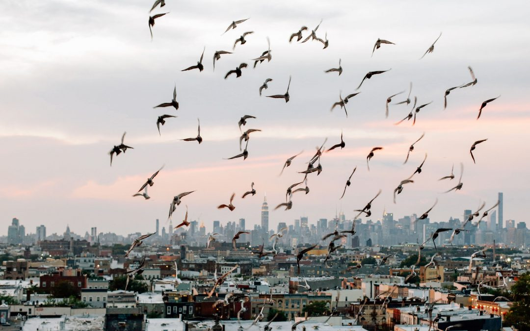 flock of birds taking flight over a city
