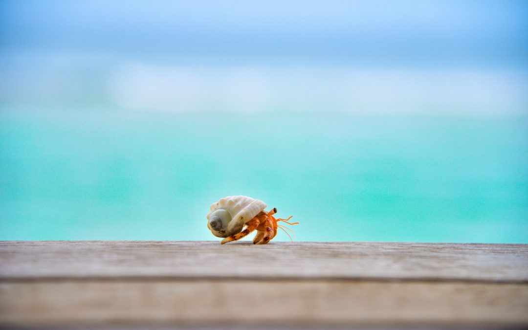 little guy crustacean